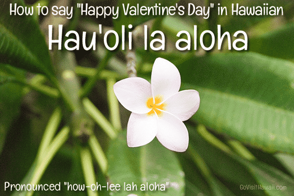 happy-valentines-hawaiian